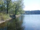 Pařezitý rybník